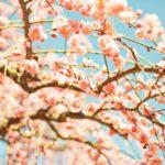 可愛いキラメイピンク工藤美桜の経歴がすごかった!名前の読み方やプロフも調査