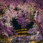 東京ミッドタウンガーデンで花見!2020年混雑状況は?近くの公園の遊具も調査