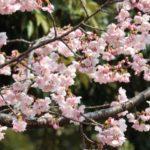 水元公園子連れお花見で混雑を避けられる時間帯!2021年のBBQ受付状況は?