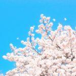 高麗山公園(湘南平)にお花見子連れハイキング!何歳から挑戦?服装や持ち物を調査