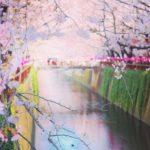 2021年の桜祭り!目黒川の花見混雑状況&子連れOKな個室やテラスのあるカフェ