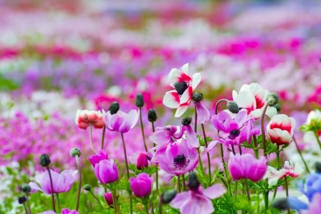 可愛らしいお花畑