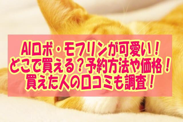 茶色い猫のまなざし