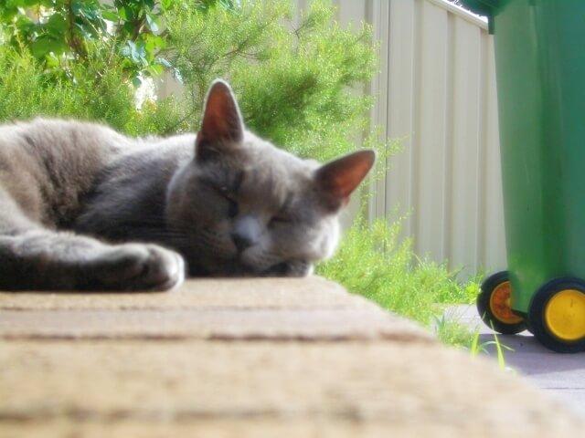 気持ちよく昼寝するグレーの猫
