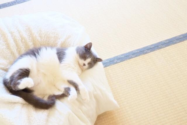 黒白の猫のお昼寝