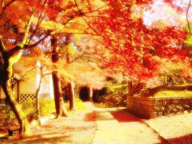 紅葉のきれいな道