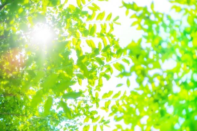 日差しの差し込むグリーン