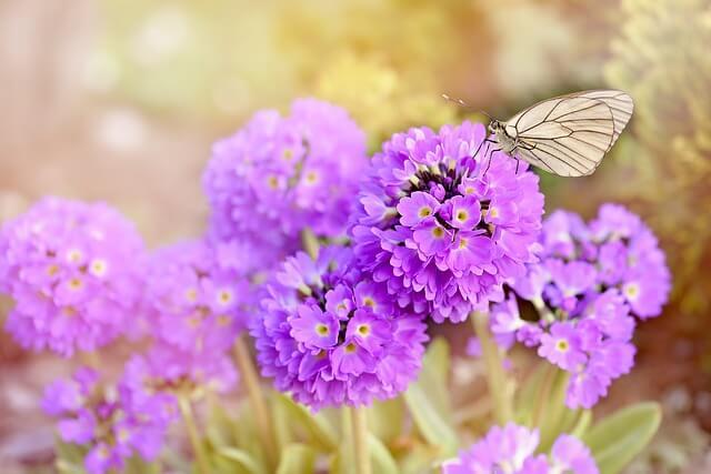 紫色の花と蝶