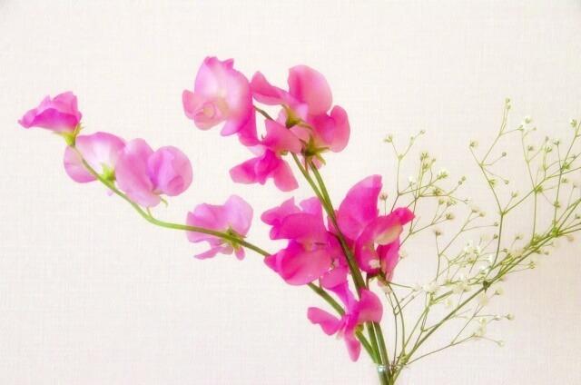「着飾る恋」川口春奈の衣装!ピンクの花柄シャツ花柄スカートとの上級コーデ