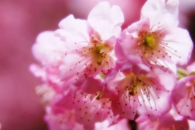 「着飾る恋」川口春奈のピンクの花柄シャツ