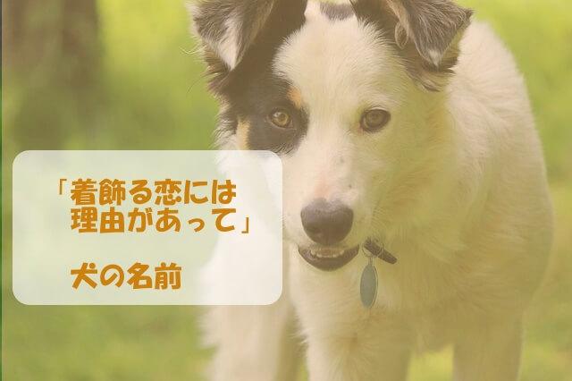 「着飾る恋には理由があって」の犬の名前