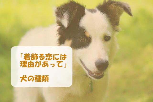 「着飾る恋には理由があって」の犬の種類