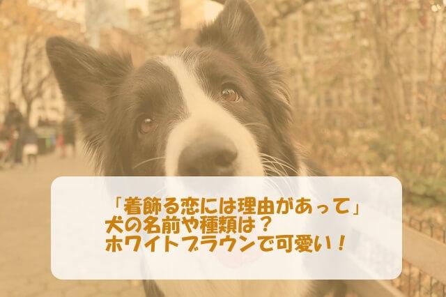 「着飾る恋には理由があって」の犬の名前や種類は?ホワイトブラウンで可愛い!