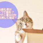 加藤礼愛(れいあ)はハーフで整形?アイプチ二重なのか画像比較して確認!