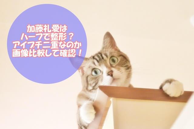 加藤礼愛はハーフで整形?