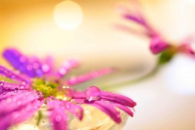 紫色のみずみずしい花