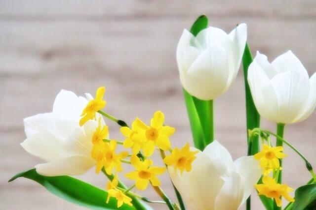 白いチューリップと黄色い花