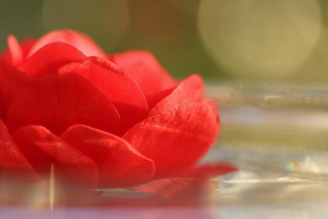西畑大吾のカラーの赤い花