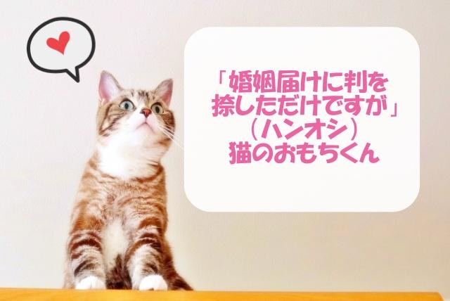 ハンオシの猫のおもちくん情報