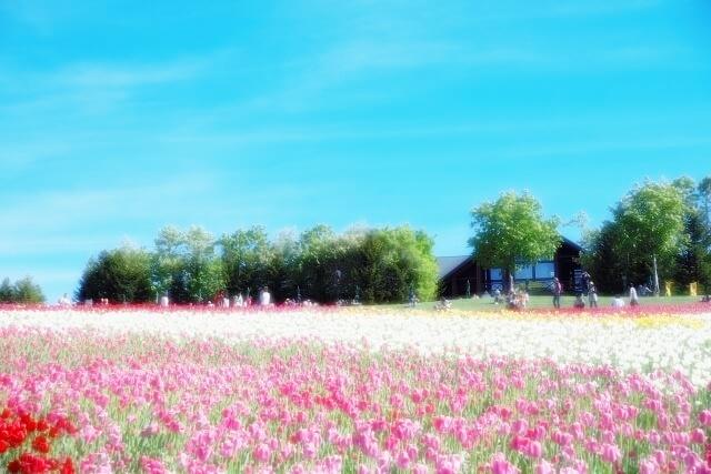 赤とピンクの花畑